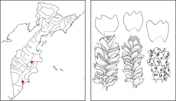 Тритомария глянцеватая tritomaria polita nees