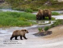 Семья камчатских бурых медведей на Узоне