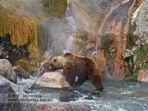 Бурый медведь Камчатки. Медвежий переход под источником Малахитовый Грот в Долине гейзеров